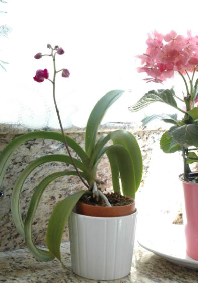 1-miniupdate-orchids-1