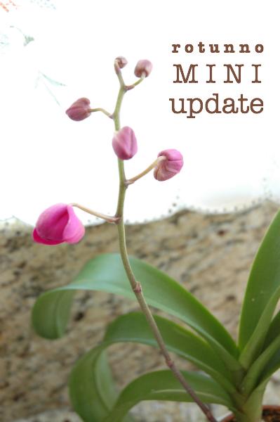 1-title-miniupdate-orchids-3