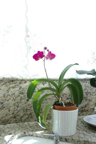 02bloom-orchid-1