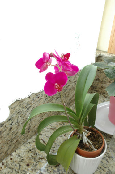 04bloom-orchid-2