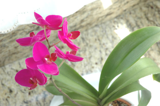 06bloom-orchid-3