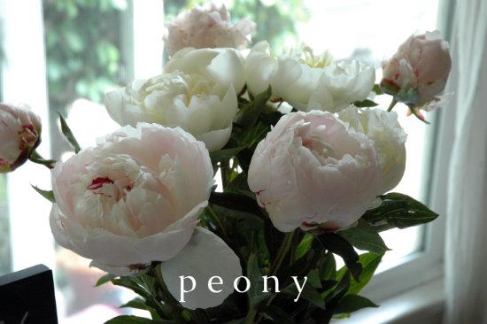 peony-0