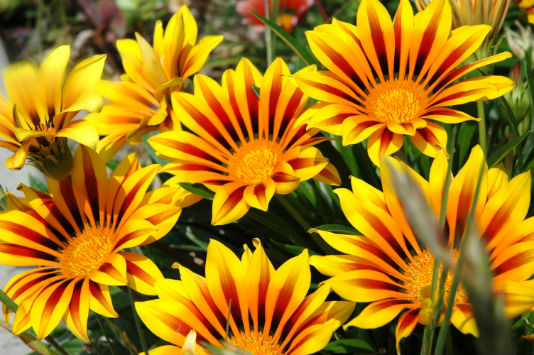 sn-flowers-orange-yellow-fall
